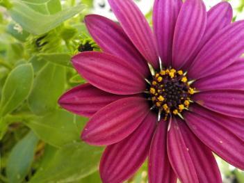 purple flower of life