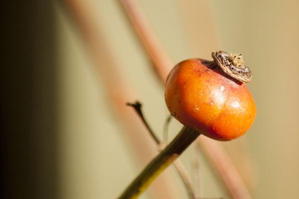 seed bud by magicman