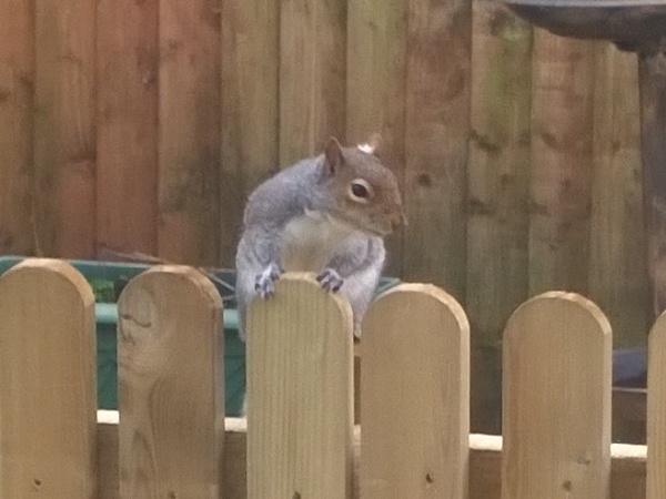 Squirrel by fiveskinz