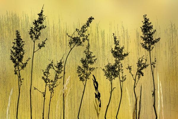 Hedgerow Art by Irishkate