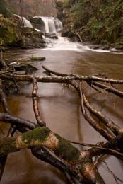 Water Ark Foss