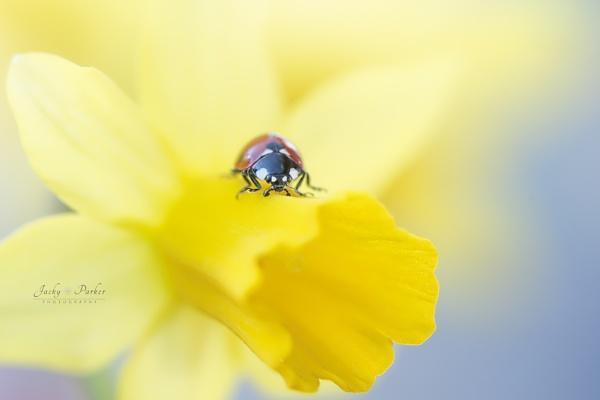 Spring Lady by jackyp