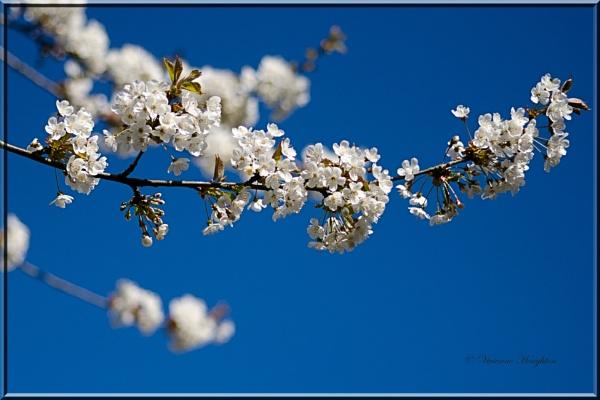Blue Sky by vivdy