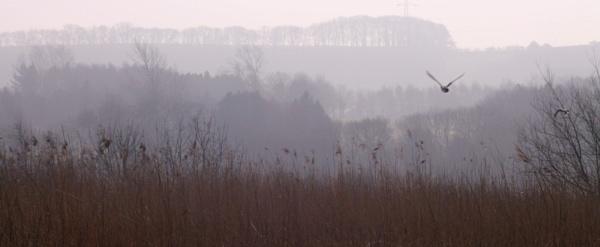 Misty Morning,Winter Reeds by Fernowl