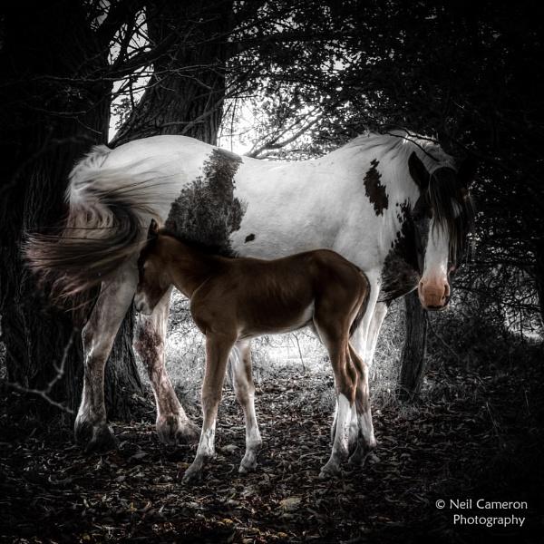 Newborn by ncameronphoto