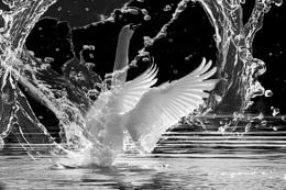 Splashing game