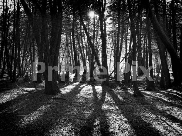 Spooky Shadows by PrimePix