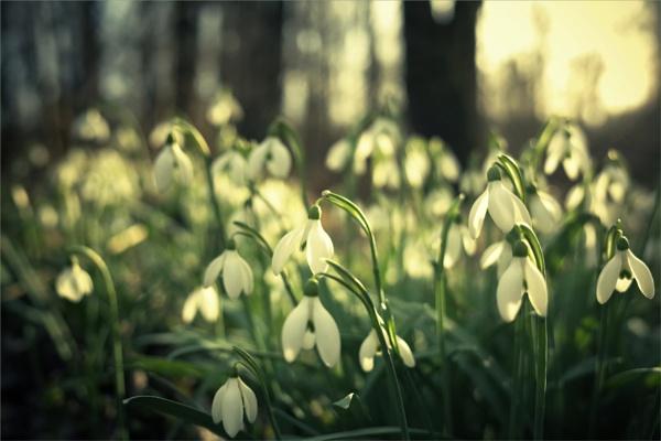 in the meadow...... by bliba
