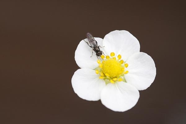 Spring!! by Glynn