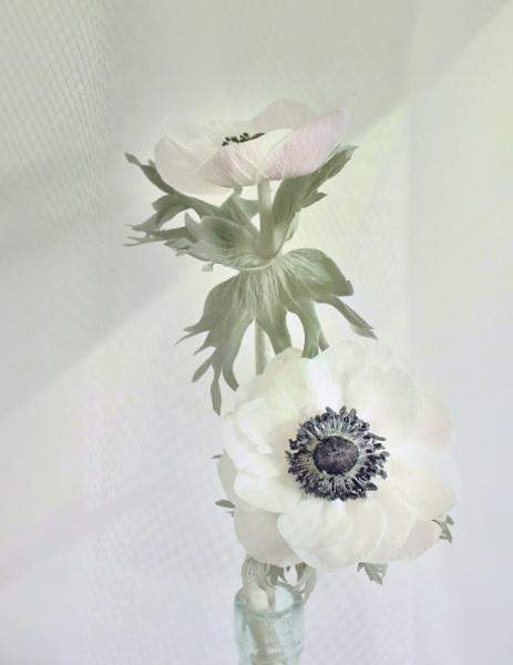 Pale by helenlinda