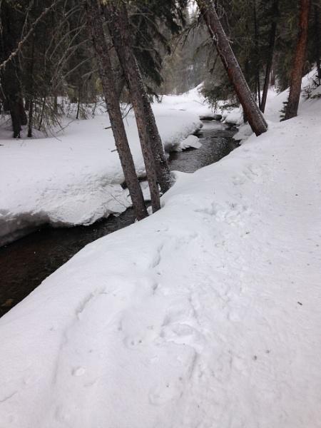 Colorado River Trail by attybrown