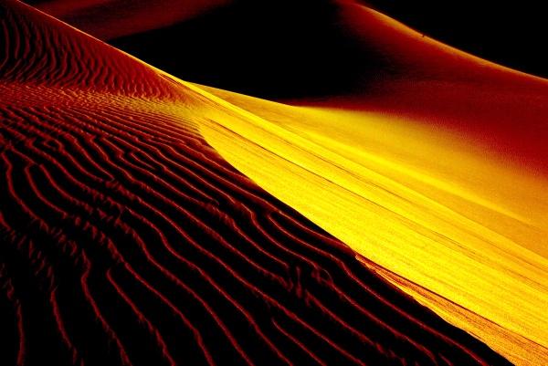 Gold mane! by alighalam