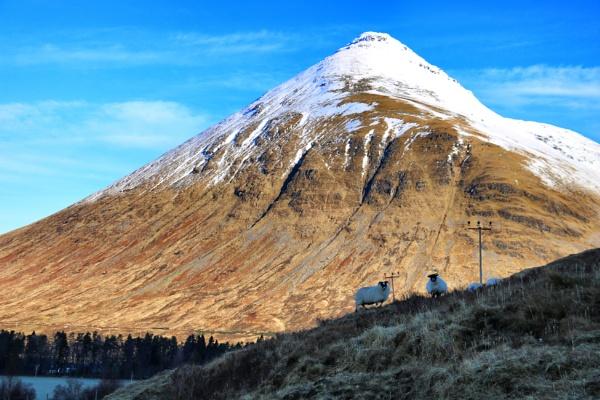 Sheep on Hill below Beinn Dorain by DanfromScotland