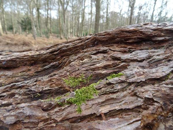 In Sandringham Woods