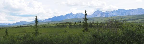 Alaska #67 by handlerstudio