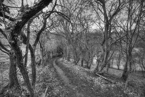 winter walk. by tanglewoodplayer
