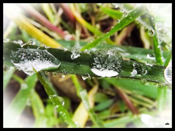 frozen raindrops on rye grass by Mototaur
