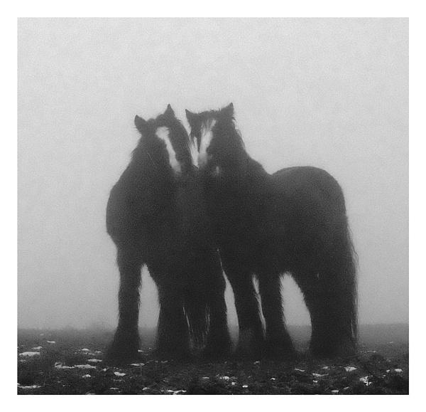 horses V by whatriveristhis