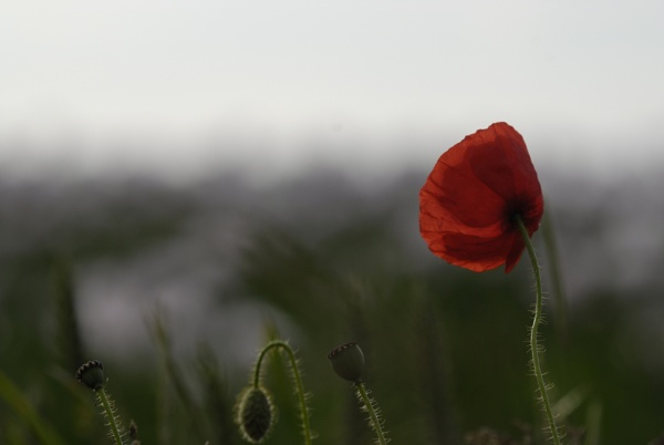 Red by faulknerstv