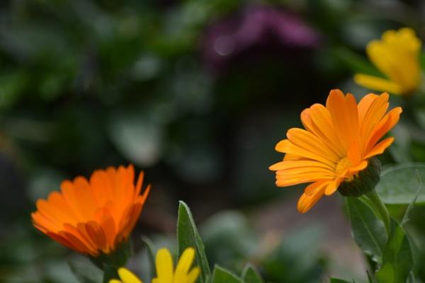 Hi Spring! by alimorshedizad