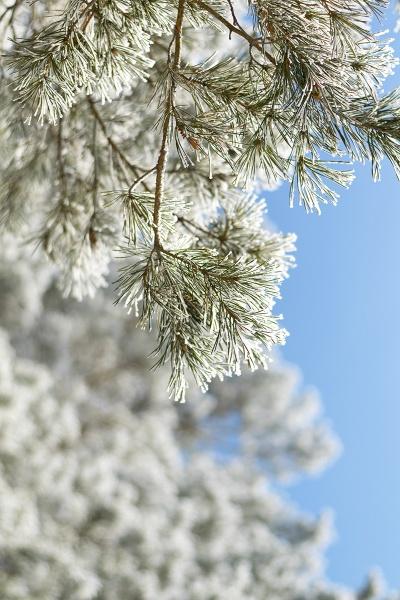 magic snow by PhotoEarl