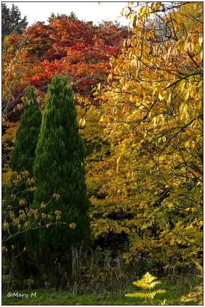 Shades of Autumn by marshfam19
