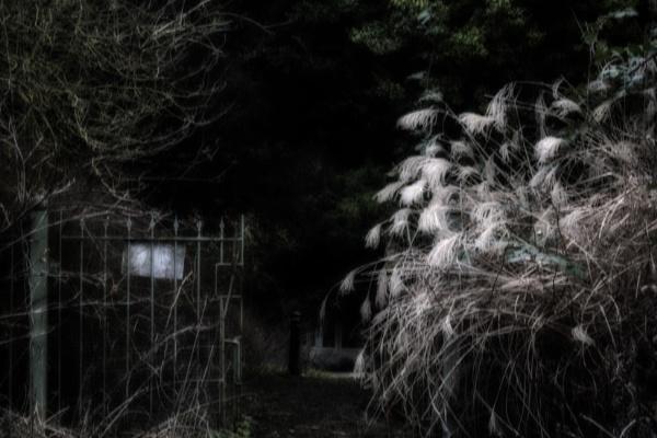 The garden gate by dawnstorr