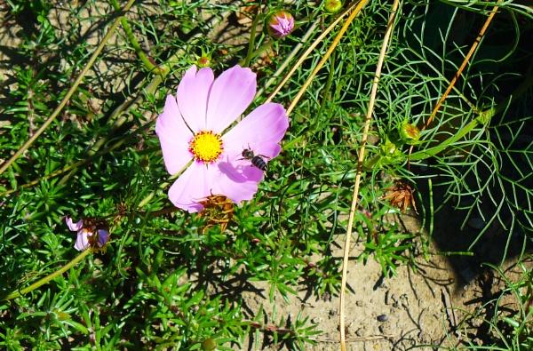 flower by marimea43