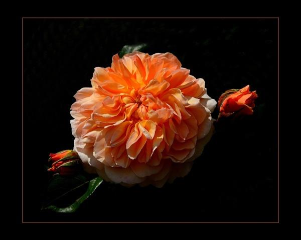 Glowing Amber by sweetpea62