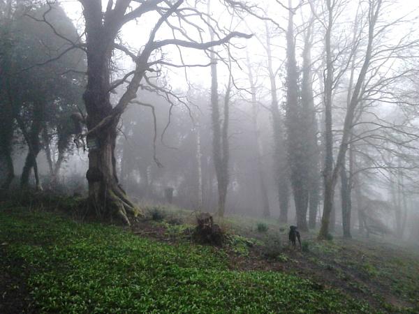 very foggy this am by Mototaur