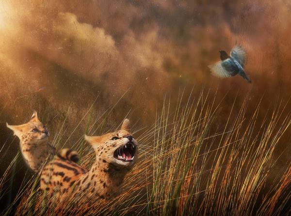 Servals by cbrundage