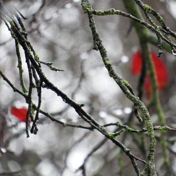lingering leaves by enfys