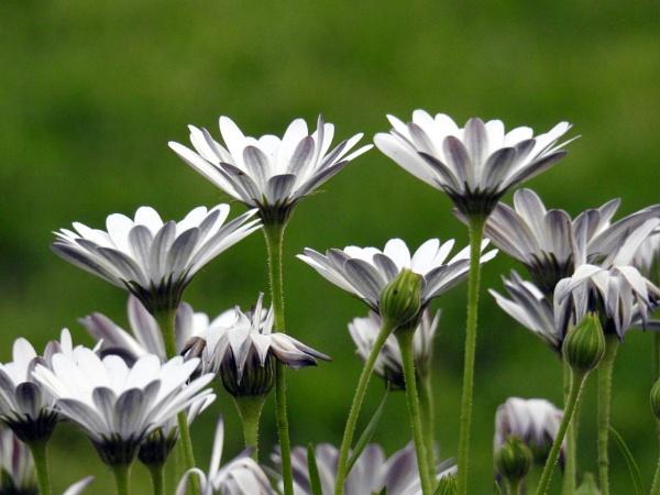 flower by gautamc