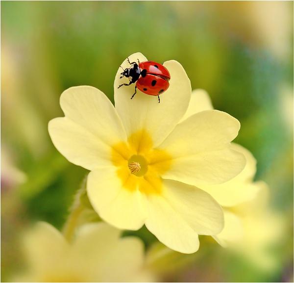 * Ladybird * by bricurtis