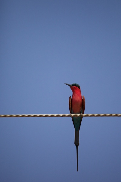 Bird On A Wire by vickyf