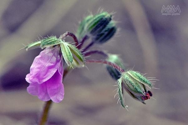 Tiny beauty by Majnoon