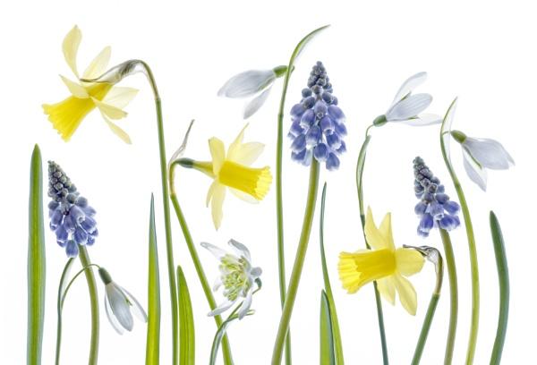 Wild Spring by MandyD