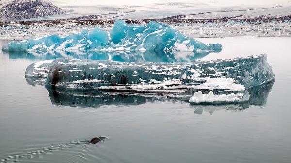 View of Jokulsarlon Ice Lagoon by Phil_Bird