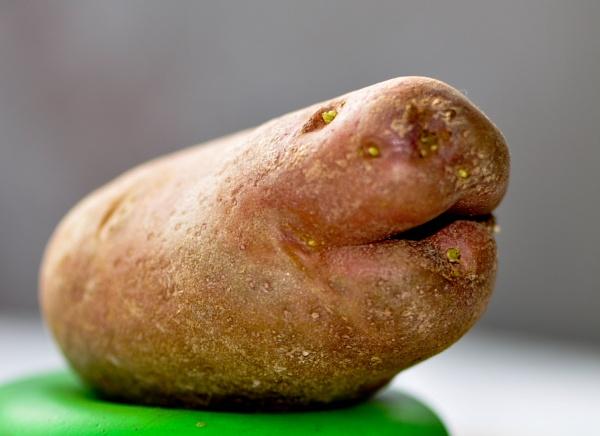 Shark potato by HarrietH