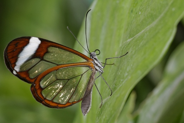 Glass Wing by vickylou