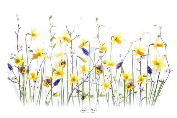 My Spring Garden by jackyp