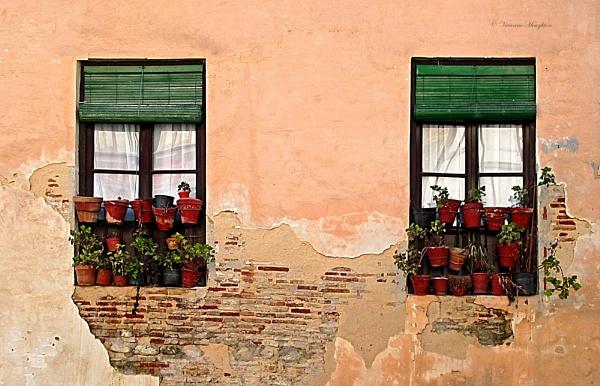 Window Dressing by vivdy