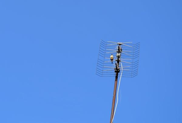 Bird on TV-antenna by Laslo