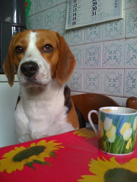 coffee break by laura1