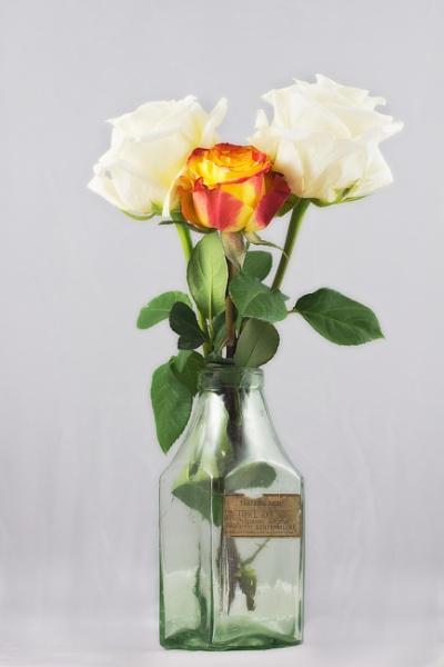 Flowers In A Bottle by kaybee
