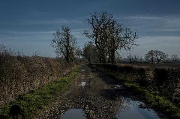 Back lane by feen96