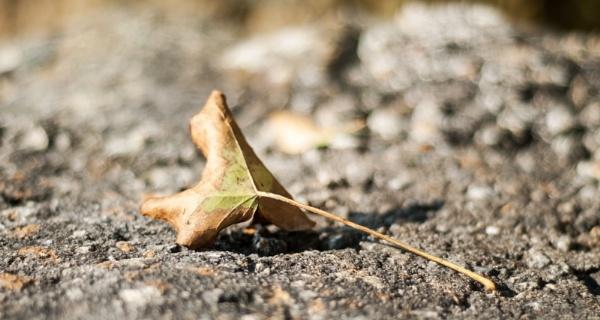 Fallen leaf by Madoldie