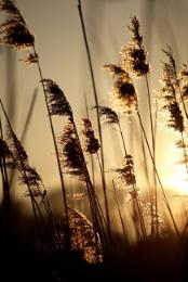 Sunstruck