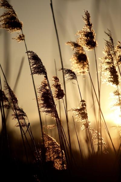 Sunstruck by Justine67