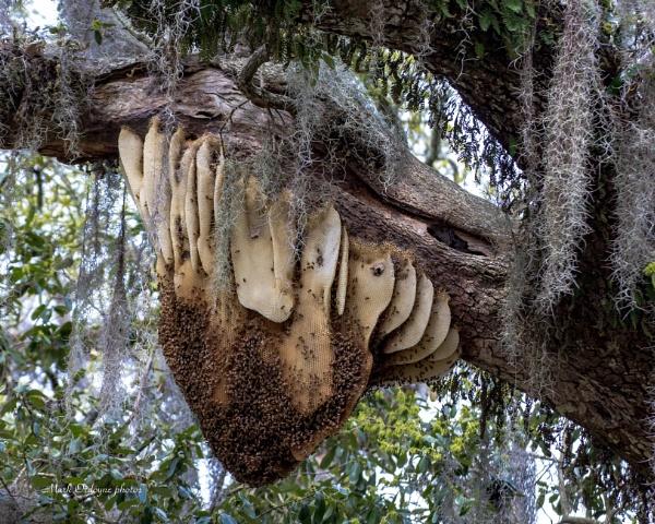 Honey Comb by mordoyne